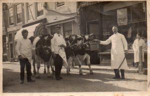 De slagerij aan Maarstraat 15 in de jaren '30. Grootvader Abraham Wilkens trekt aan het touw, zoon Izaak staat in het midden tussen de koeien. Dochter Selma staat rechtsachter. Beeldbank Gemeentearchief Schouwen-Duiveland.