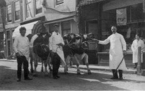 Maarstraat 15 in de jaren '30. Grootvader Abraham Wilkens trekt aan het touw, zoon Izaak staat in het midden tussen de koeien. Dochter Selma staat rechts achter. Beeldbank Gemeentearchief Schouwen-Duiveland.